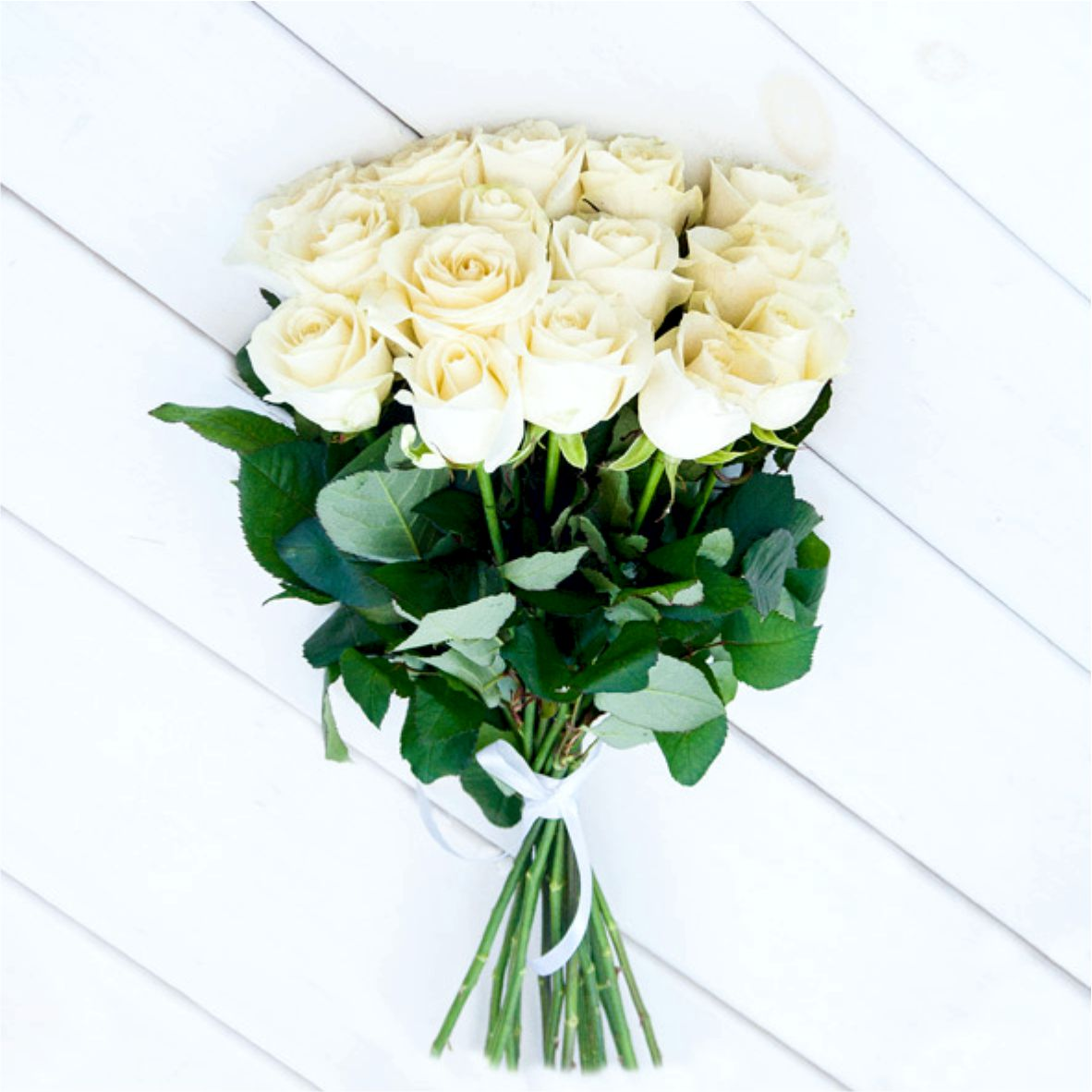 belih-roz
